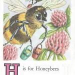 Карточки с английским алфавитом и стишками для детей: H.