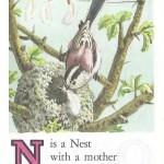 Карточки с английским алфавитом и стишками для детей: N.